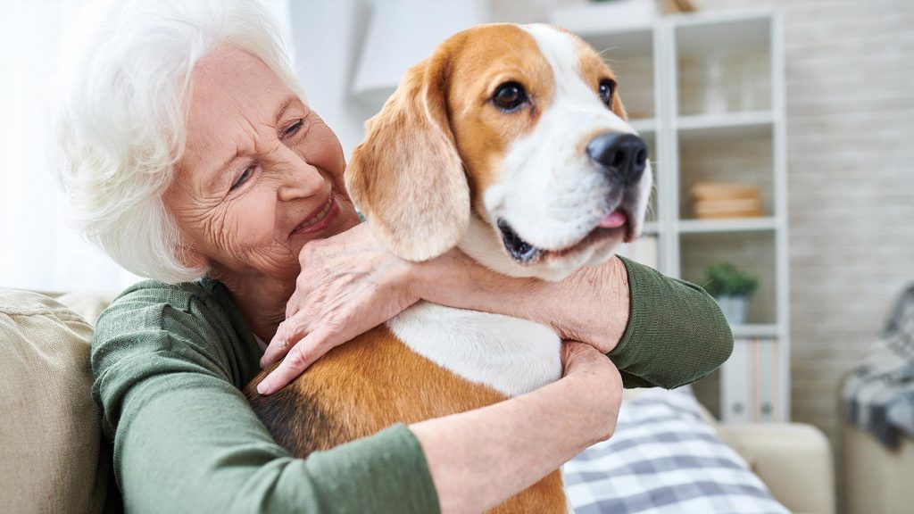 animal therapy, pet therapy